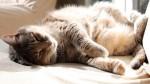 Что такое сон: современные научные теории о происхождении, свойствах и функциях сна
